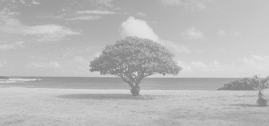 individual tree b&w